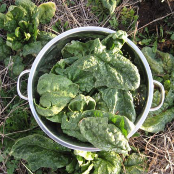 GROW GUIDE Spinach