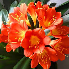 Identify the different pest and diseases on your Clivias